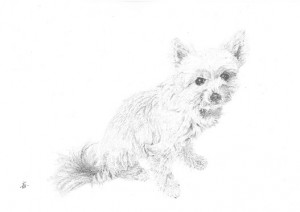 犬2015-11-05